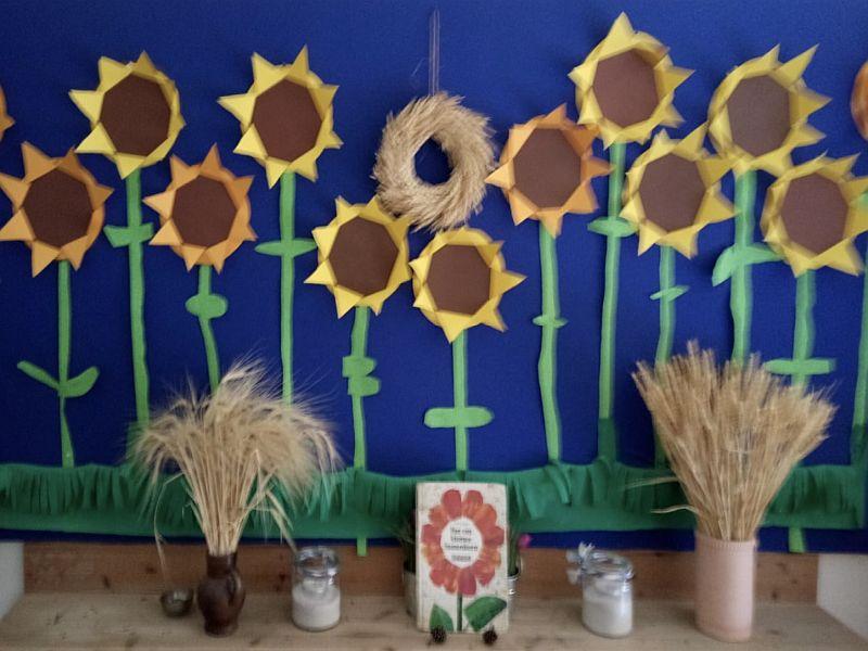 aus kleinem Samenkorn wird ein Sonnenblumenfeld